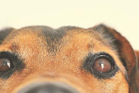 Wimmerra Malle Veterinary Service: Slider Image 4
